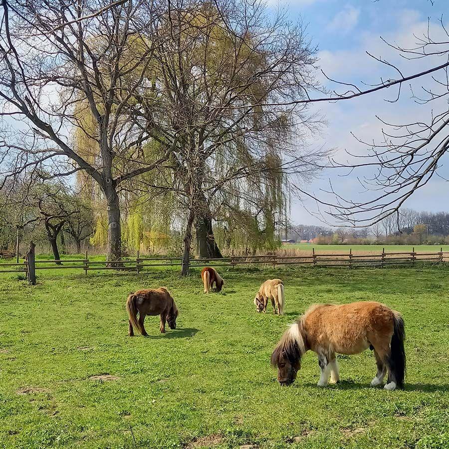 Unsere Ponys freuen sich auf Dich