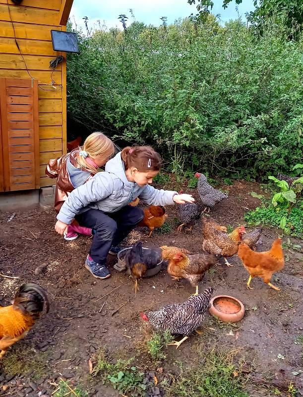 Unsere Hühnerfamilie