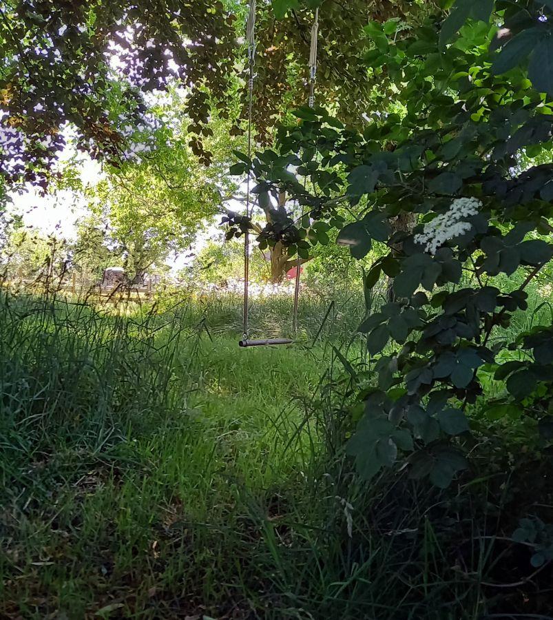 Mit Pflanzenkraft und Waldbaden ins Wochenende